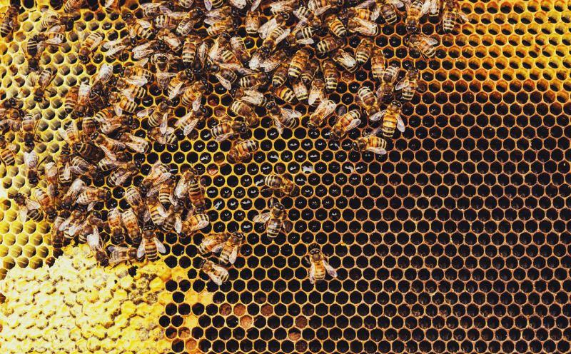 مدیریت املاک زنبوری